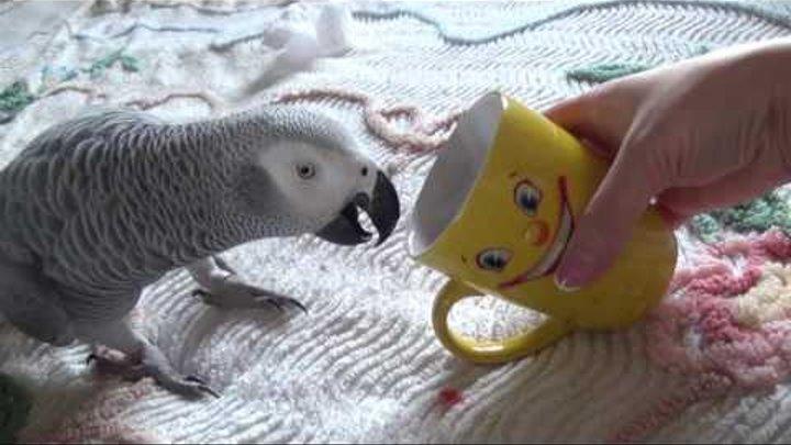 Жако Рома Любит чай с калиной Попугай хочет погрызть КОМПЬЮТЕР- 2 сезон,16 серия