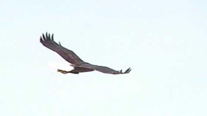 Eddie the Eagle Glider
