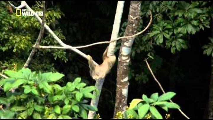 National Geographic. Тайная жизнь хищников. В лесах. 4 серия (в HD)