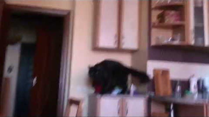 Слон в посудной лавке ;)