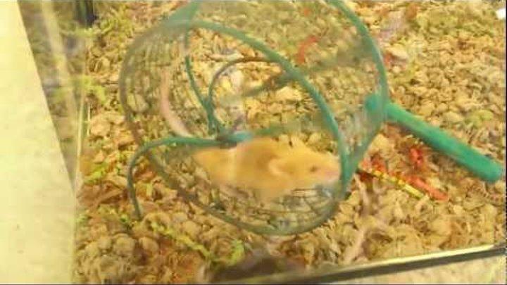 Мышиные бега: жизненная философия за 1 минуту