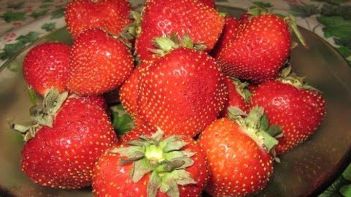 Клубника с сахаром на зиму Замороженные ягоды