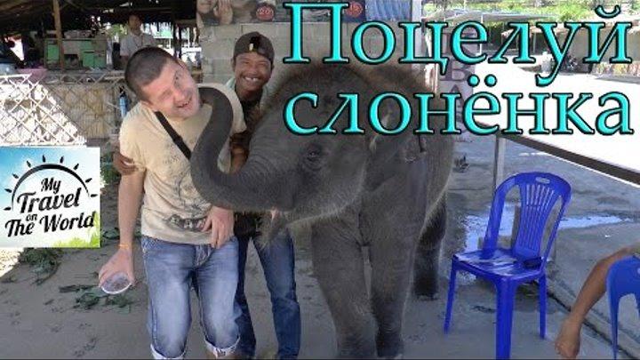 Поцелуй слонёнка, Пхукет, Таиланд, серия 420