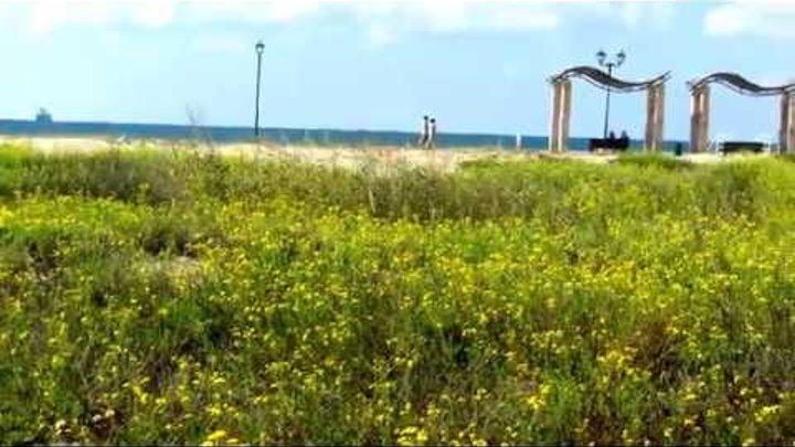 Цветы,прогулочная дорожка,море!Кирьят-Ям Израиль.