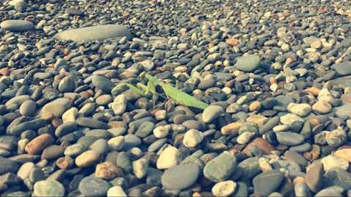 Богомол направляется к морю | Бархатный сезон в Сочи | Октябрь 2017