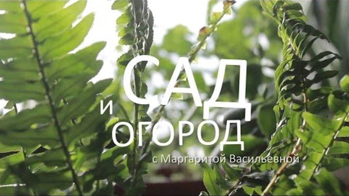 Сад и огород с Маргаритой Васильевной - сезон 2, выпуск 1