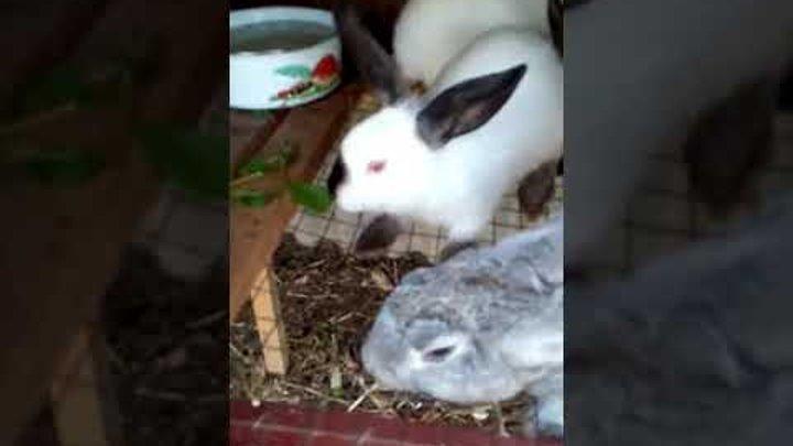 Кролики размножаются круче и быстрее, чем спиннеры в нашей стране:-)