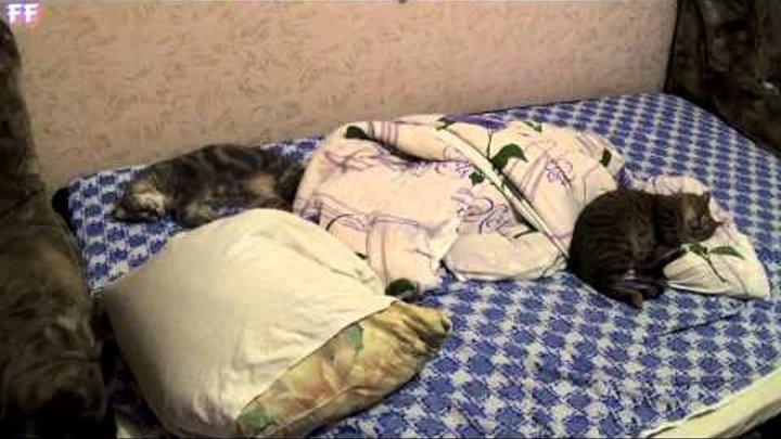 Кот Фунтик и Васька отдыхают...