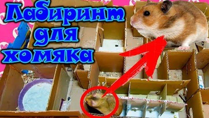 ЛАБИРИНТ ДЛЯ ХОМЯКА ПОЛОСА ПРЕПЯТСТВИЙ - ИГРОВАЯ КОМНАТА ДЛЯ ХОМЯЧКОВ | hamster