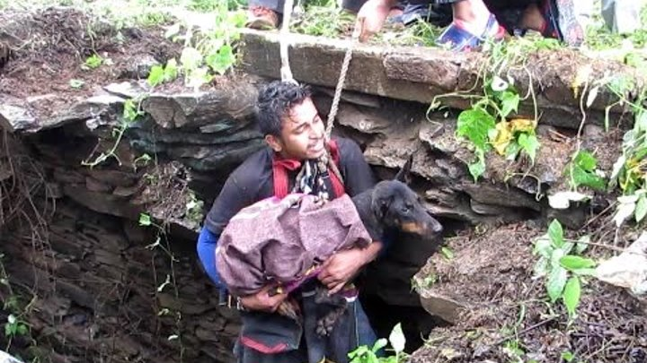 Dog sobs when she sees rescuer coming to save her