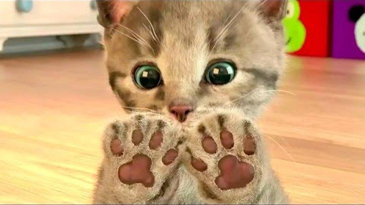 МОЙ Маленький КОТЕНОК Мультик про котика СИМУЛЯТОР Видео Игра для детей My Cute Little Pet МАЛЫШЕРИН