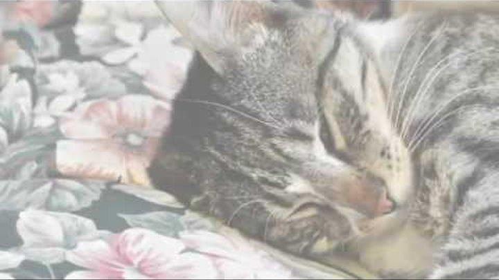 Как быстро заснуть и выспаться Практические советы Бонус котята