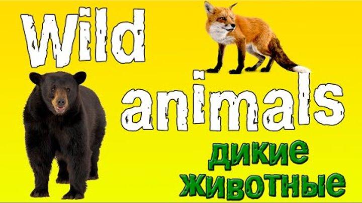 Английский для детей. Животные на английском языке.(дикие животные 1).