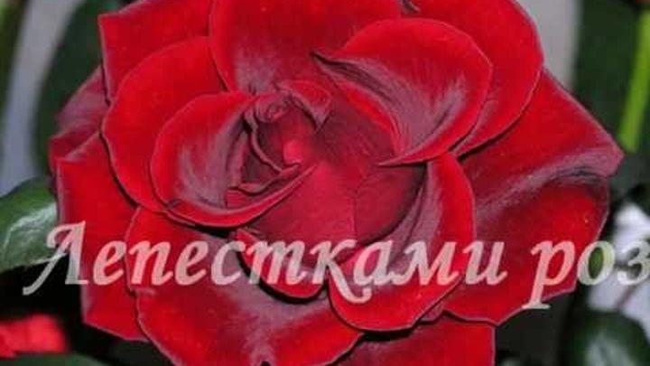 Андрей Ковалев - Лепестками роз Правообладатель: Quiz Group Music