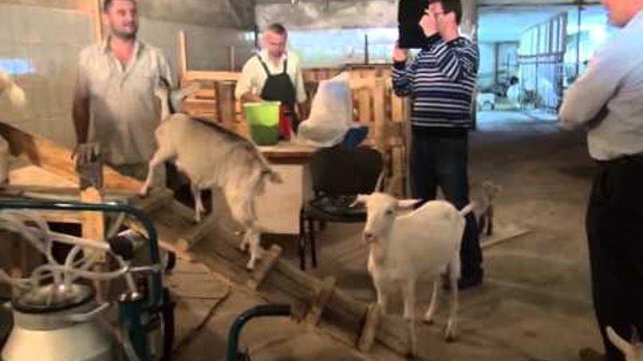Французские сыроделы в Белугино
