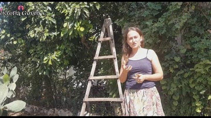 Мой турецкий двор. Собираем авокадо, гранаты и лимоны. Жизнь в Турции