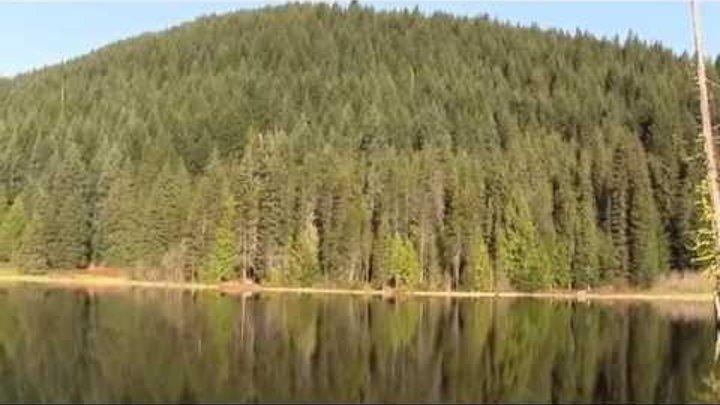 Morning, Forest Lake; Oregon, USA. Утро, лесное озеро, Орегон, США (polozov2282)