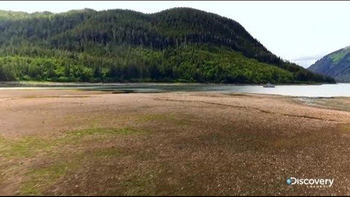 Лесной кодекс - Аляска: семья из леса