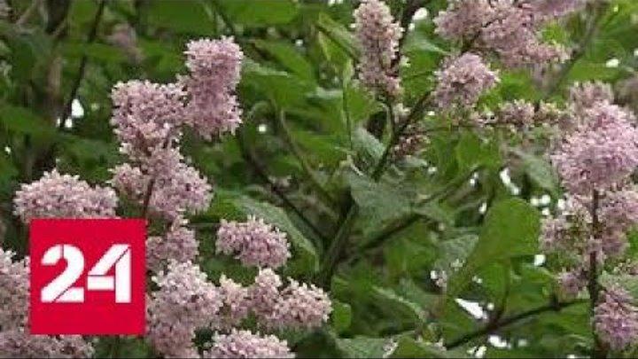 Вредное благоустройство: рабочие закатали в асфальт деревья в центре Москвы