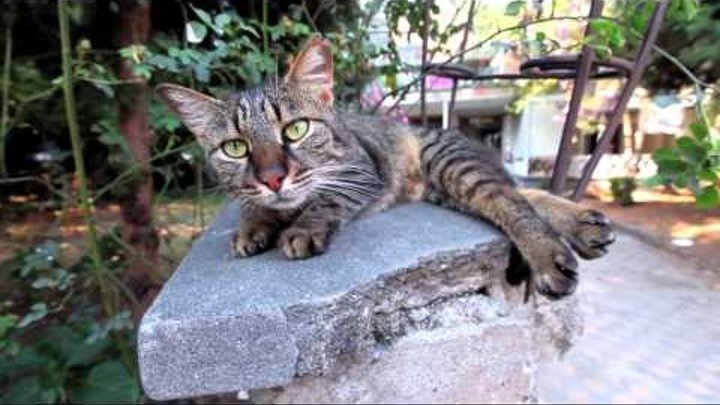 !f İstanbul 2016 - Kedi / Nine Lives: Cats in Istanbul