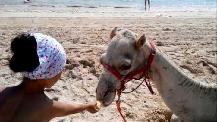 Пляж/ Смешной верблюд/ Кормим верблюда / Отдых на острове Джерба/ Отель Seabel Aladin Djerba 3*