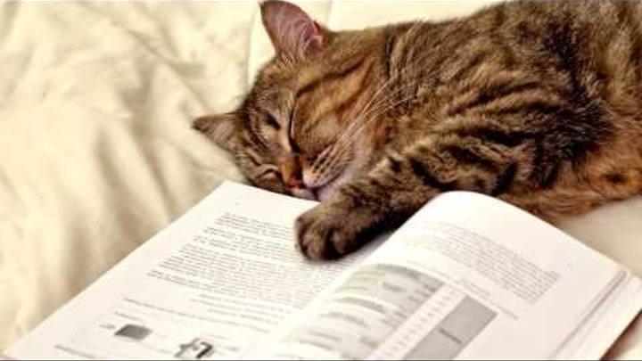 Интересные факты о кошках Факты о котиках