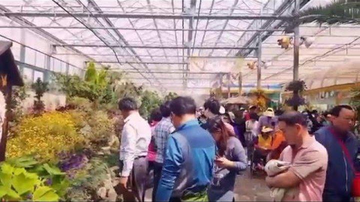 Южная Корея(на русском): отмечаем праздник- день детей в Корее. Экспо бабочек