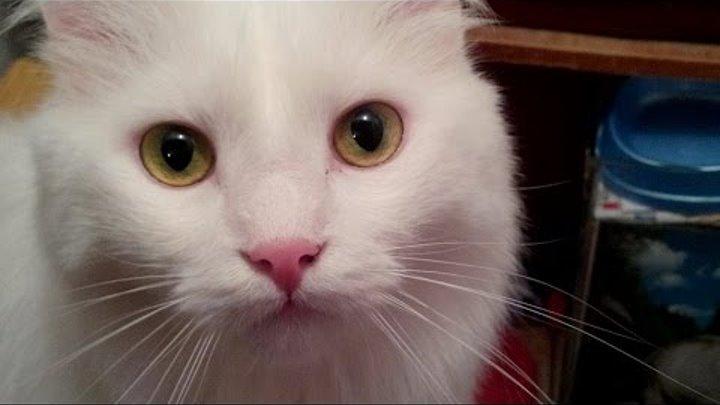 УЛЫБНИТЕСЬ !Красавчик котик ЖУЛИК./Эти забавные кошки /