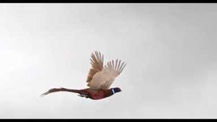 Убийцы фазана 2014 трейлер