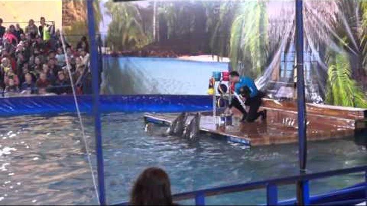 Московский дельфинарий в Абакане