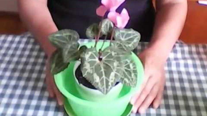 Цветочный горшок двойной. Uncommon flower-pot