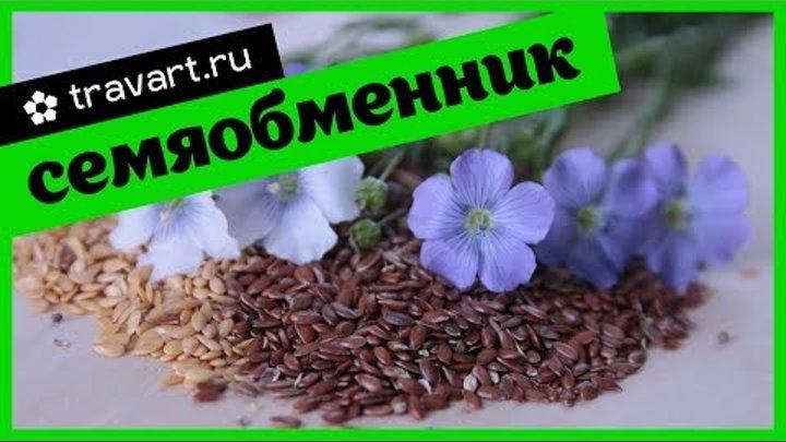 Каталог семян. Семяобменник. Старые семена. Меняемся натуральными семенами!