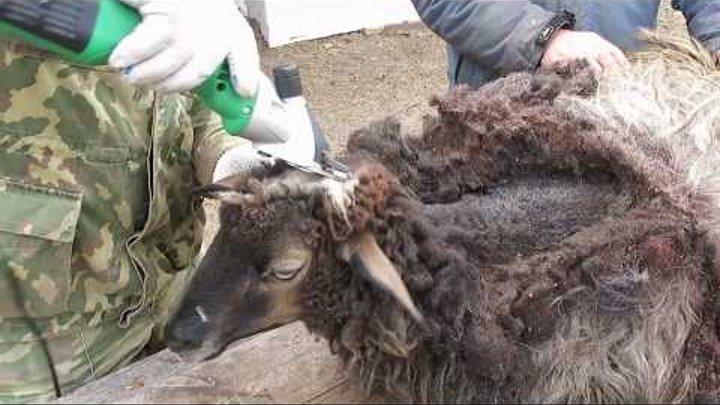 Машинка для стрижки овец Takumi 520