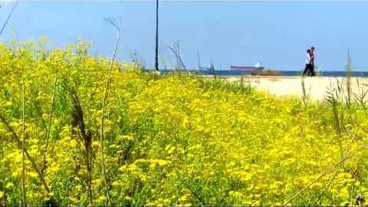 Цветы,море,корабли....Кирьят-Ям.Израиль.