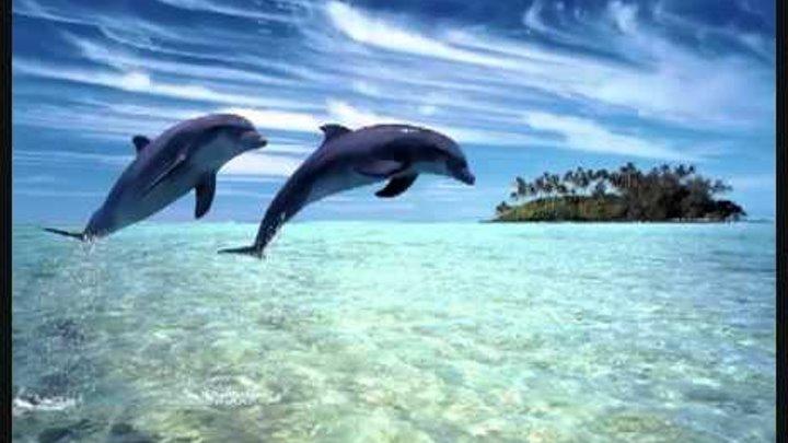 Dj Slon Ангел А Дельфины YouTube
