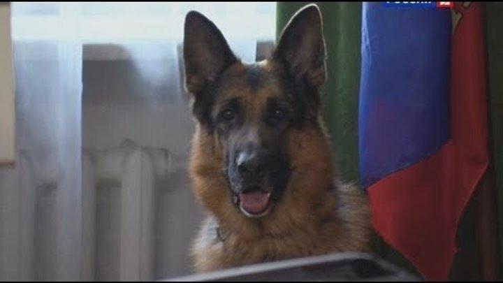 Лорд. Пёс-полицейский: сезон 1, серия 22