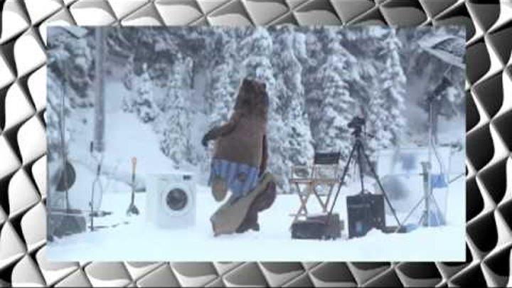 Медведь и стиральная машинка