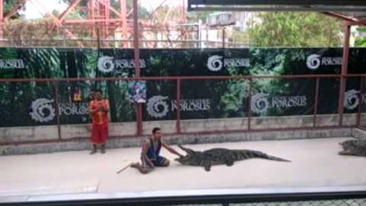 #Крокодилы,#шоу,#Пхукет.