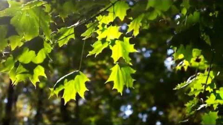 Лес, точно терем расписной, Лиловый, золотой, багряный...