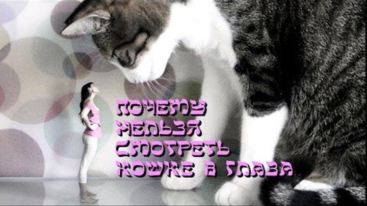 Почему нельзя смотреть кошке в глаза Мистика и реальность