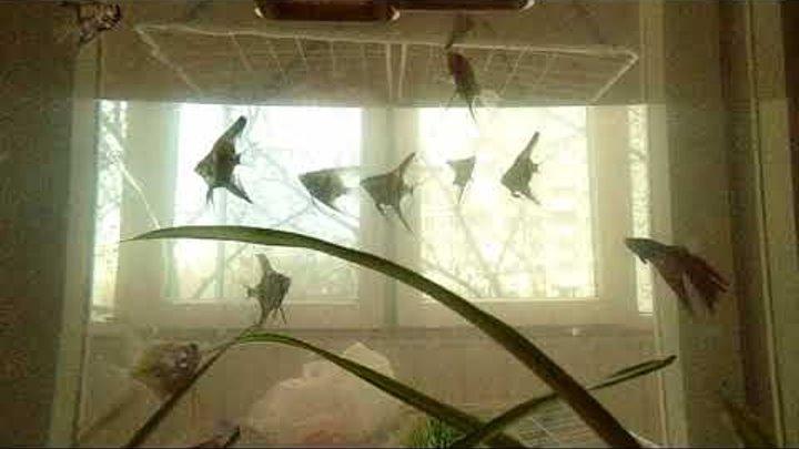 Аквариум онлайн . Прожорливая банда поселилась на подоконнике моего окна .