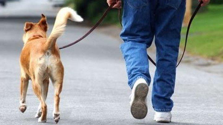 Тренировка перед покупкой собаки (жесты)