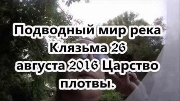 """Подводный мир реки Клязьма """"Царство плотвы"""" 26 августа 2016"""