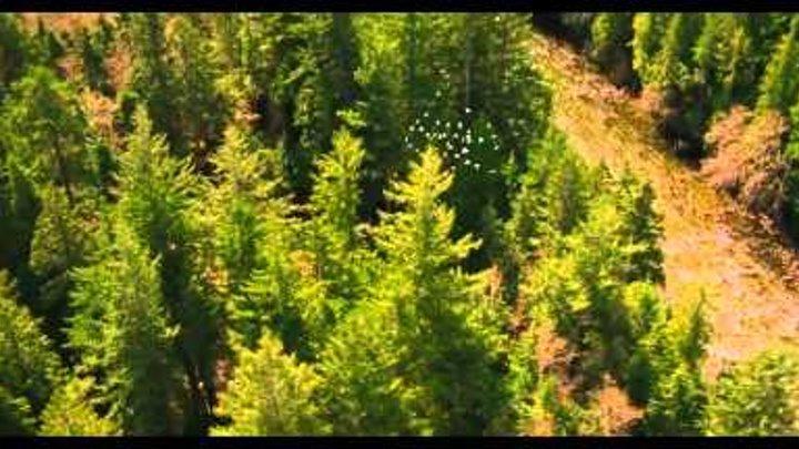 Сумерки Сага Рассвет 2 - The Twilight Saga Breaking Dawn Part 2 (Trailer) HD