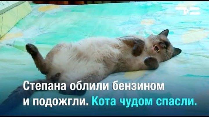 Животные-жертвы. Нечеловеческая жестокость