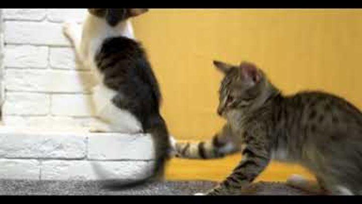 Обработка котят и щенят от блох и клещей