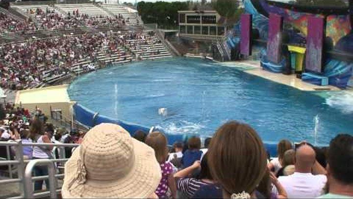 One Ocean killer whale show Shamu Stadium @ Sea World, San Diego, CA - Part 01 of 02