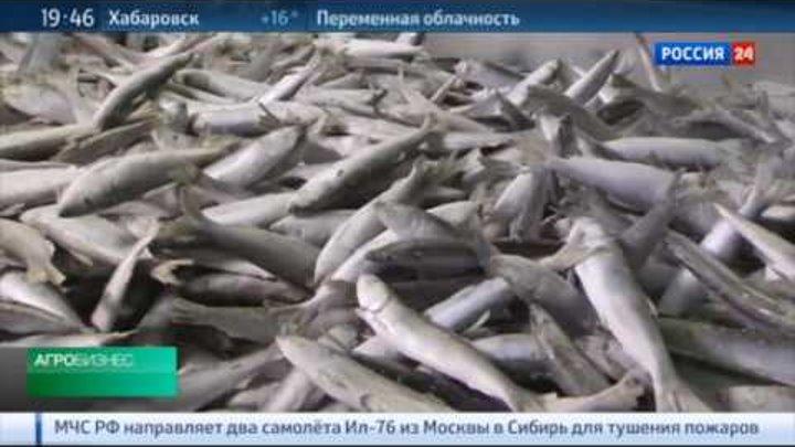 Эксперт ВНИРО о рыбной промышленности Калининградской области