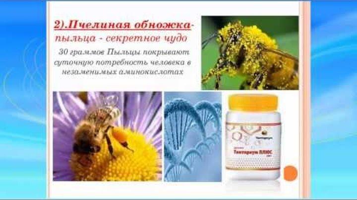 Чем удивляет и кормит пчела миллионы лет