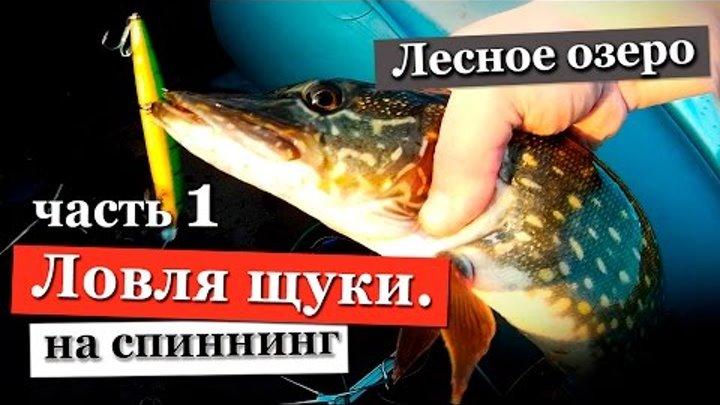 Ловля щуки весной на спиннинг. Лесное озеро Ленинградской области. Часть 1.